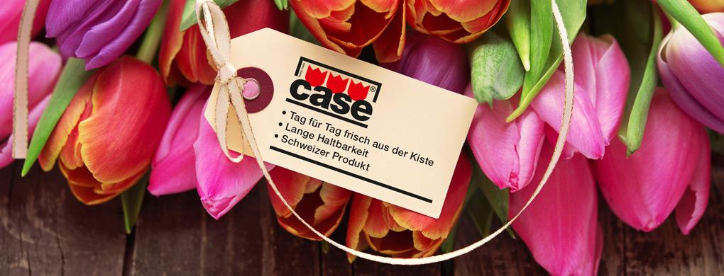 CASE-Tulpen – Tulpen die überzeugen