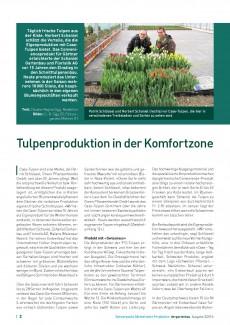 Presseartikel: Tulpenproduktion in der Komfortzone (der Gartenbau | Ausgabe 3/2016)