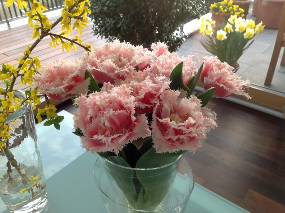 Tulpen-Galerie: Bunter Tulpensorte Queensland