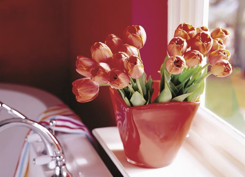 Tulpen-Galerie: Ad Rem im Strauss