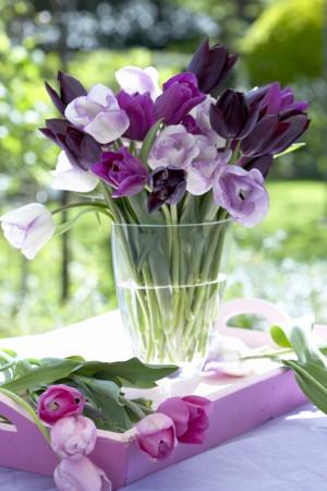 Pflegetipps für Tulpen